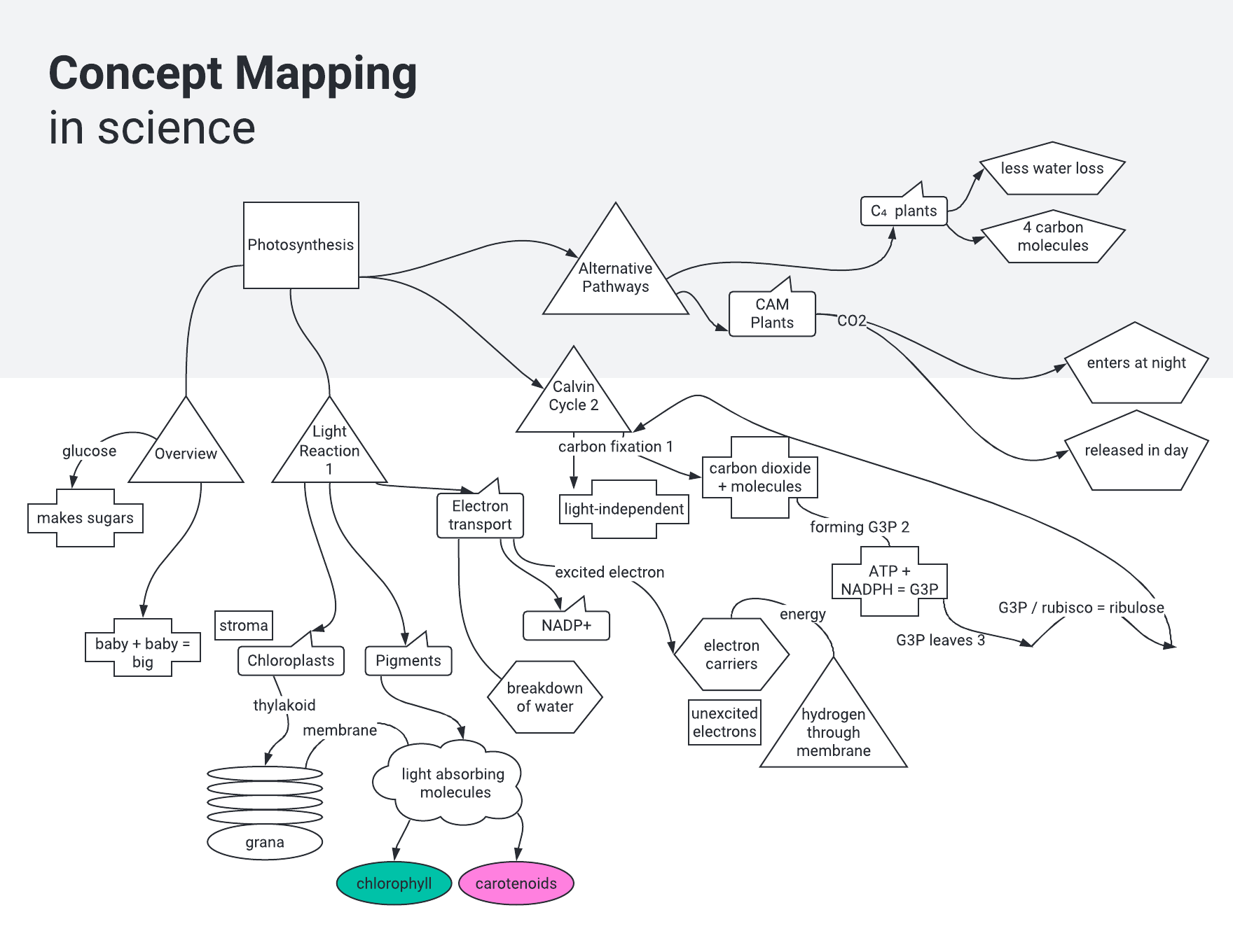 Science concept map template