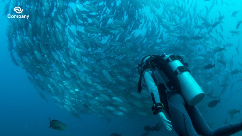 Scuba diver Zoom background