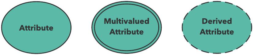 ER diagram attributes