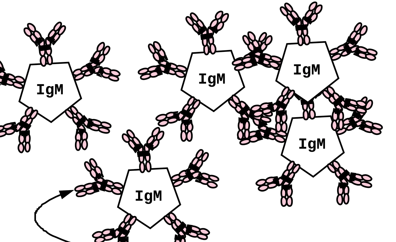 antibody clusters made in Lucidchart