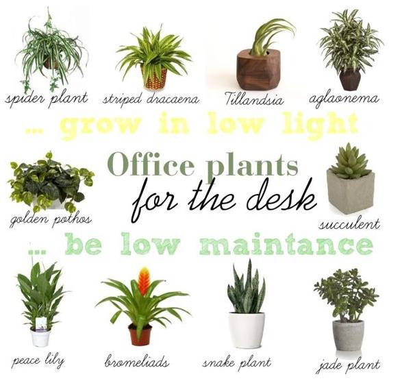 4 simple ways to decorate your office lucidchart blog - Enhancing work efficiency home indoor plants ...