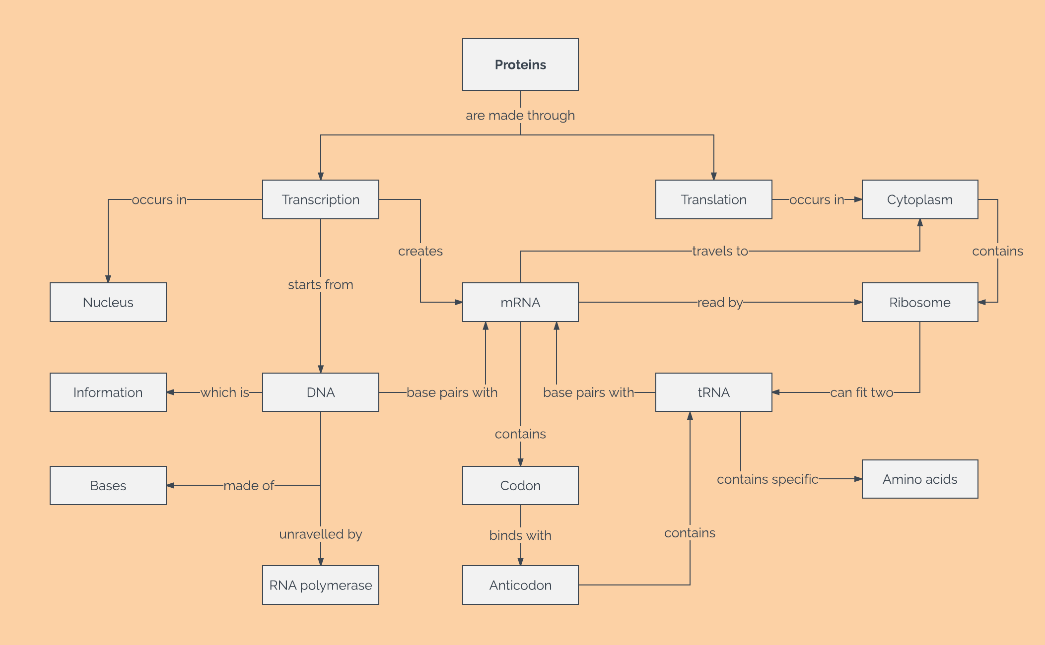 How to Make a Concept Map in Word | Lucidchart Blog