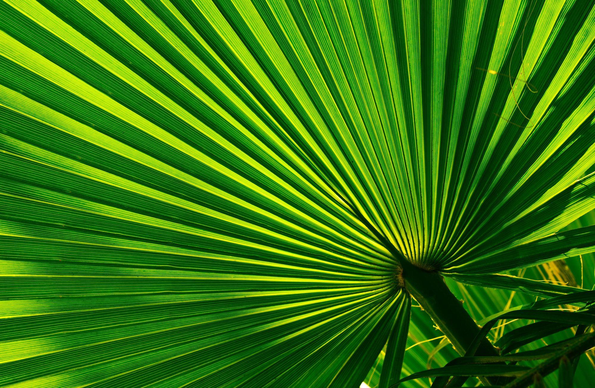 Green color branding