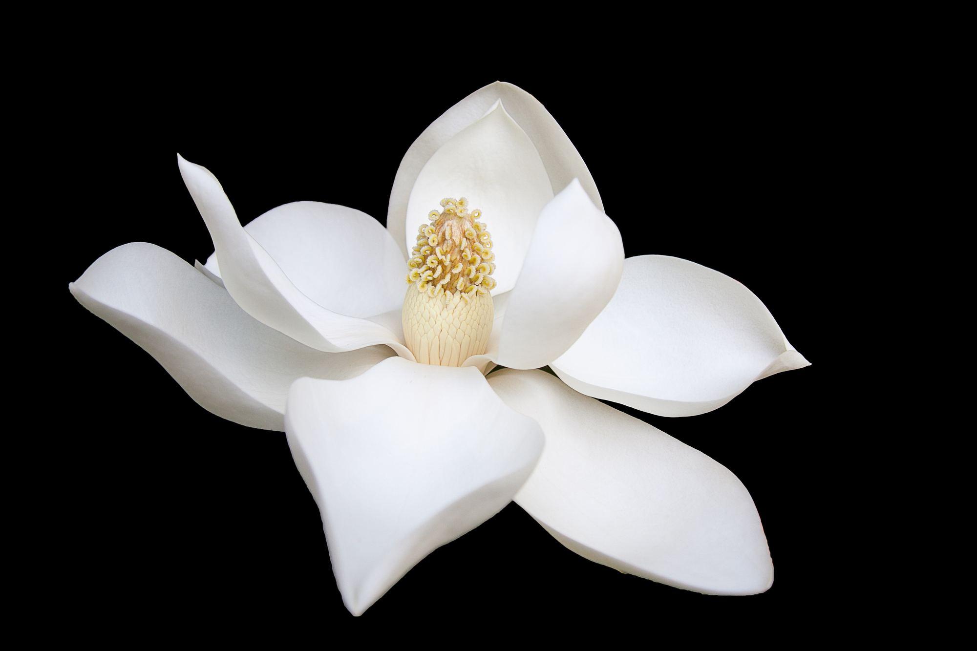 White color branding