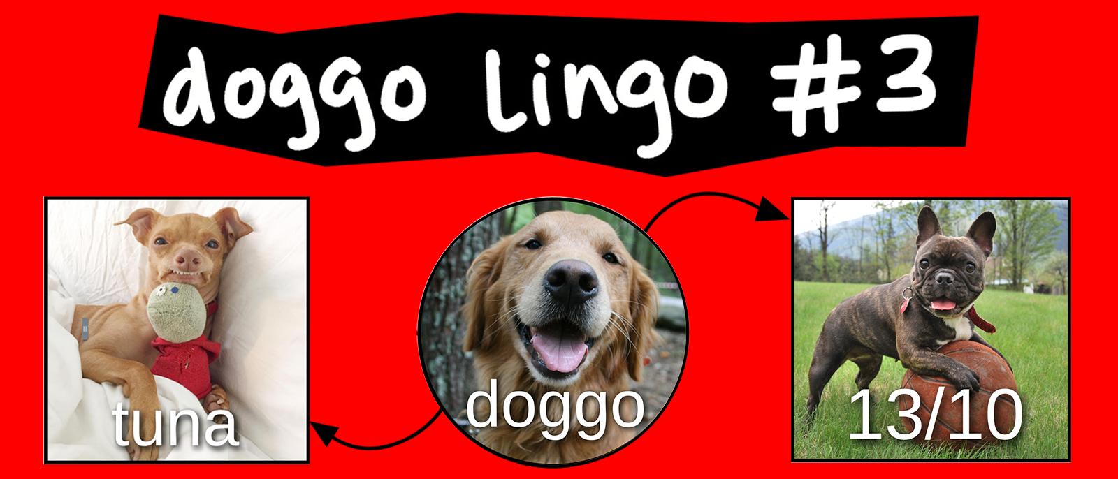 doggo meme chart
