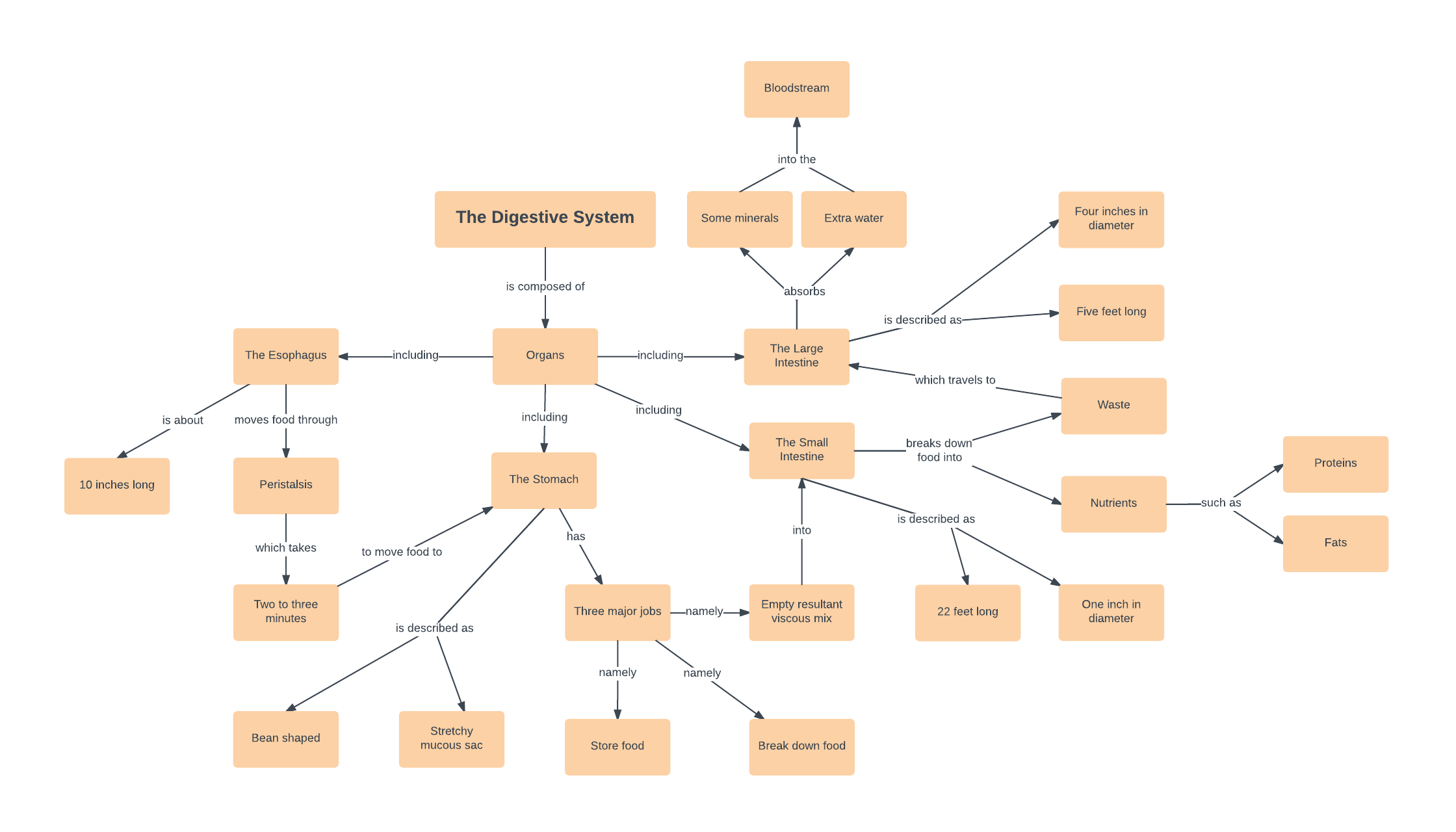 Avid Vocabulary Concept Map.Concept Map Templates And Examples Lucidchart Blog