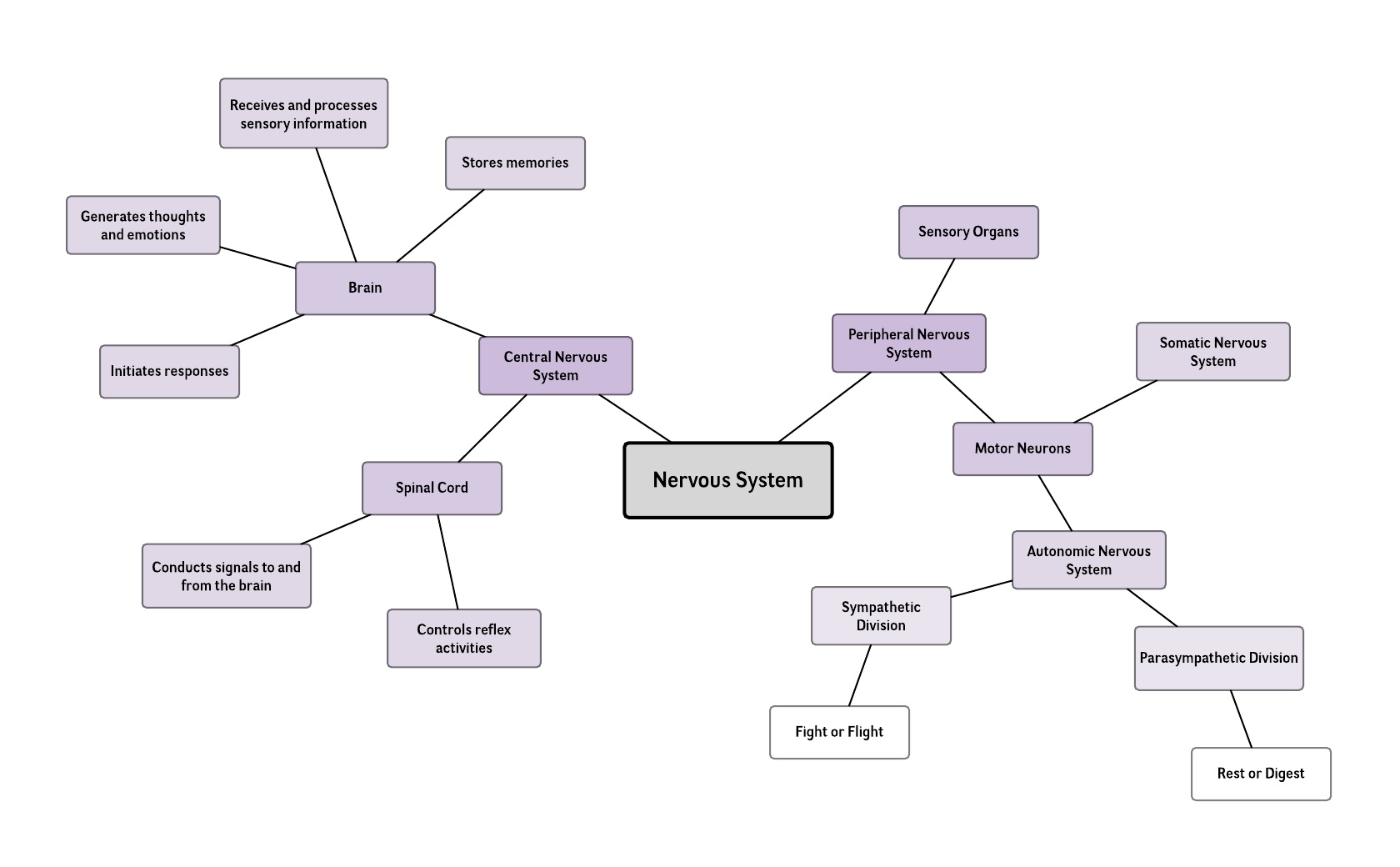 nervous system mind map