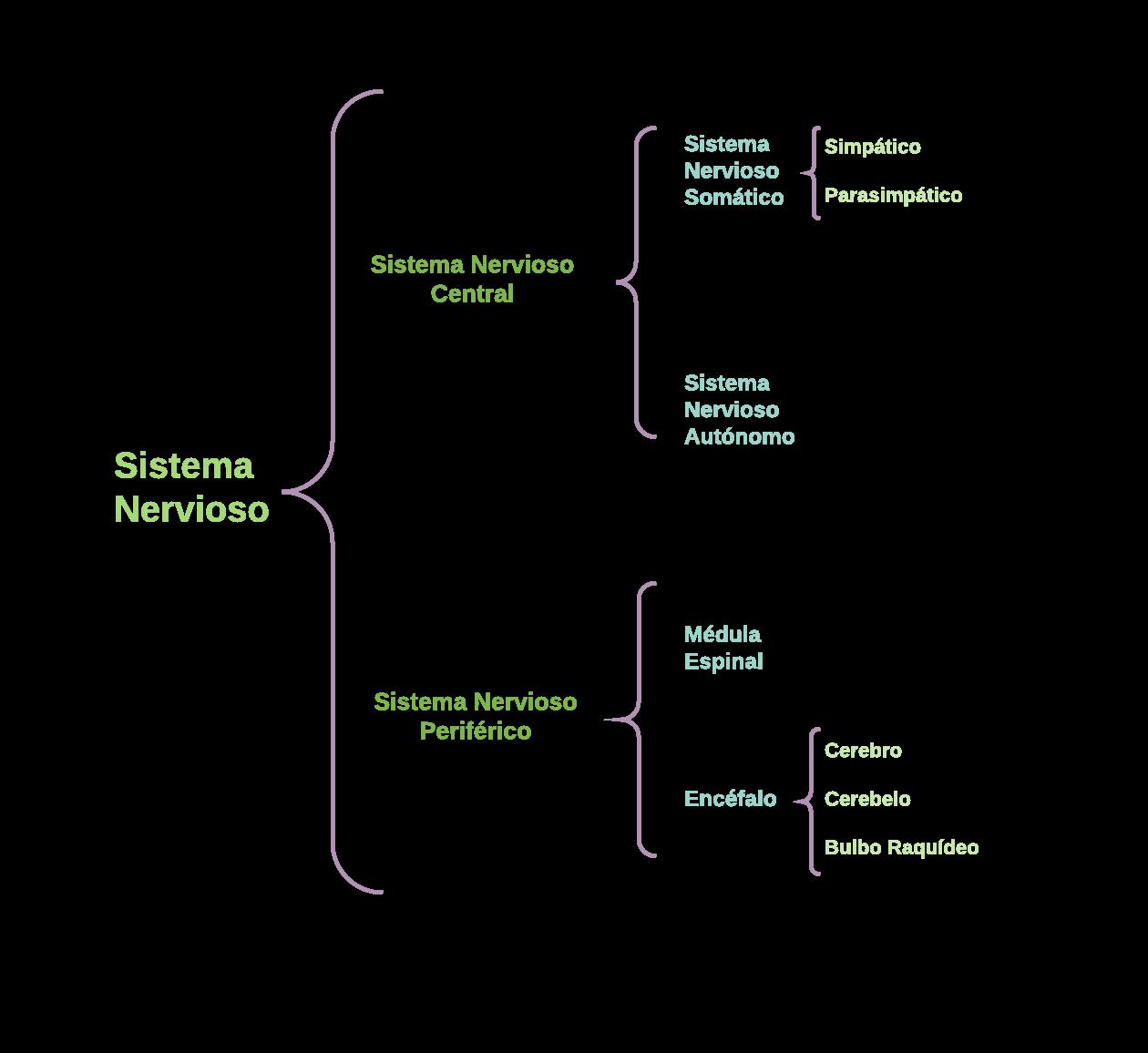 Cuadro Sinoptico del Sistema Nervioso