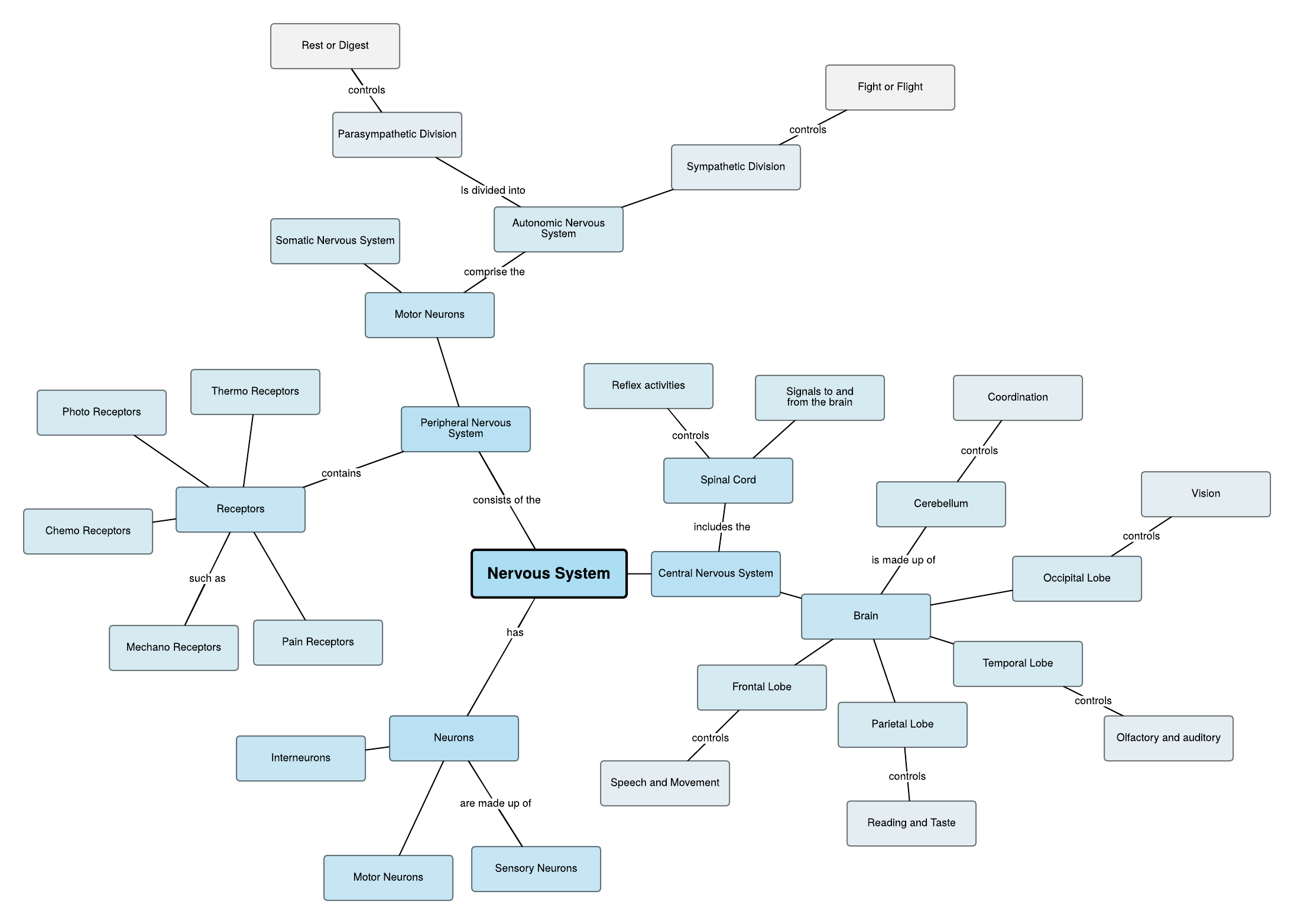 Mapa mental do sistema nervoso
