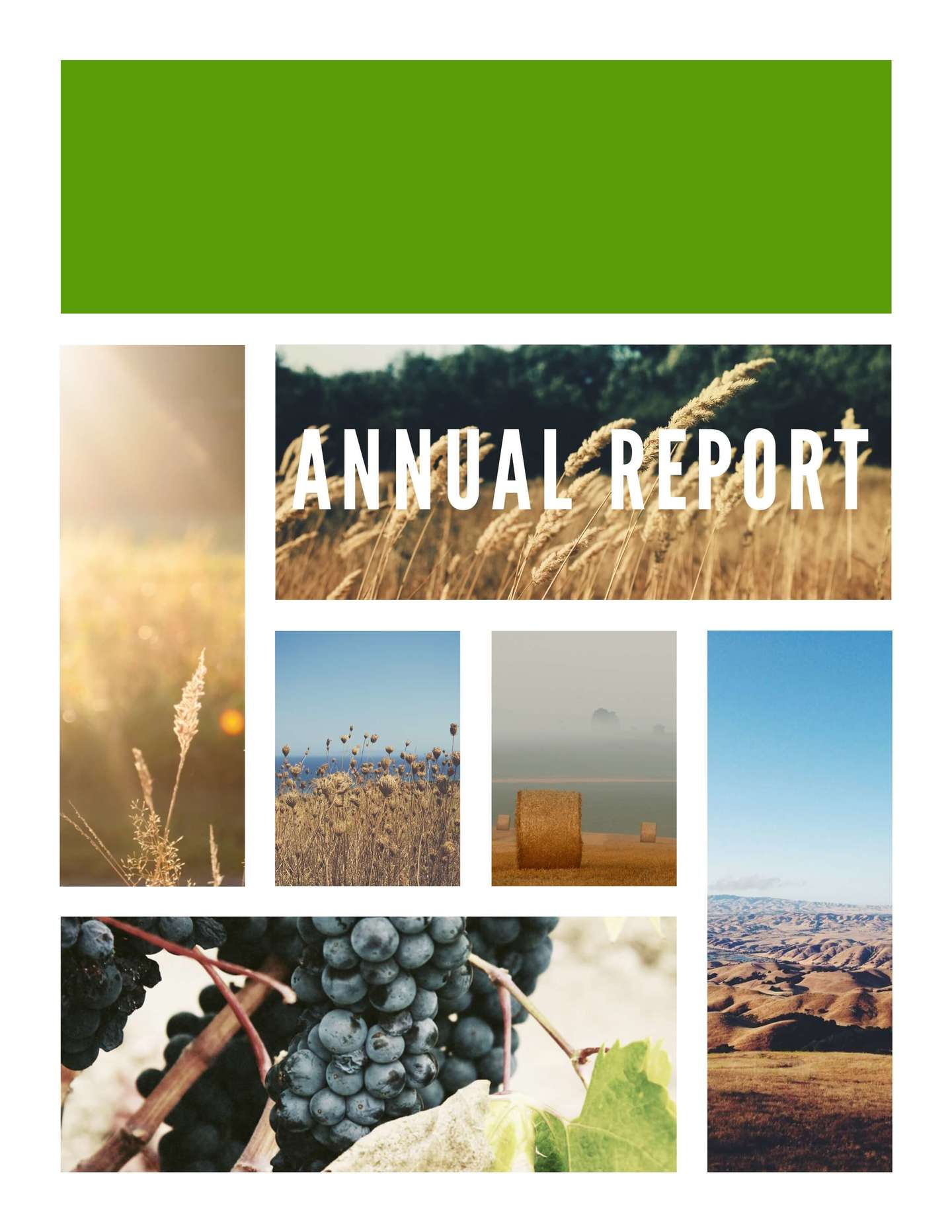 Premium Annual Report Example  Financial Report Template Free